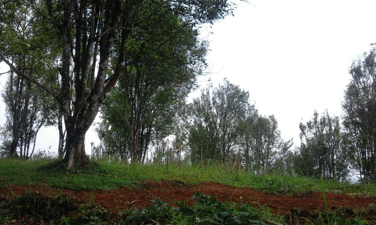 Tanah Kebun Produktif