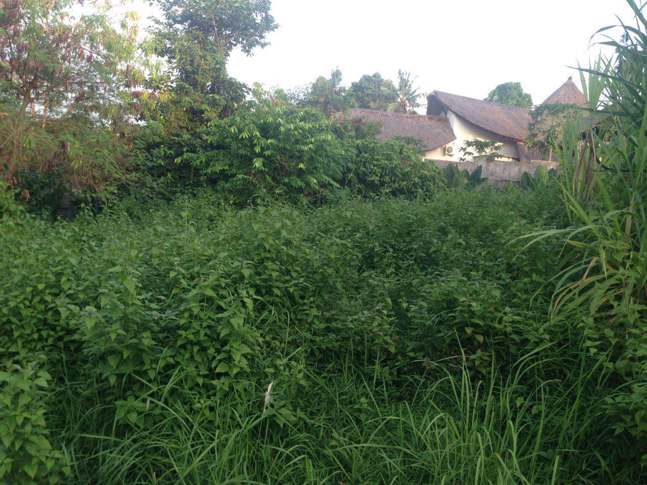 Freehold Land in Padonan, Canggu