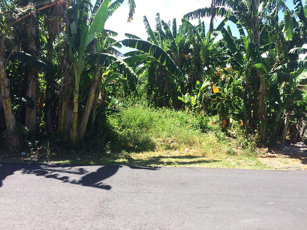 Cheap Freehold Land Near Canggu Beach