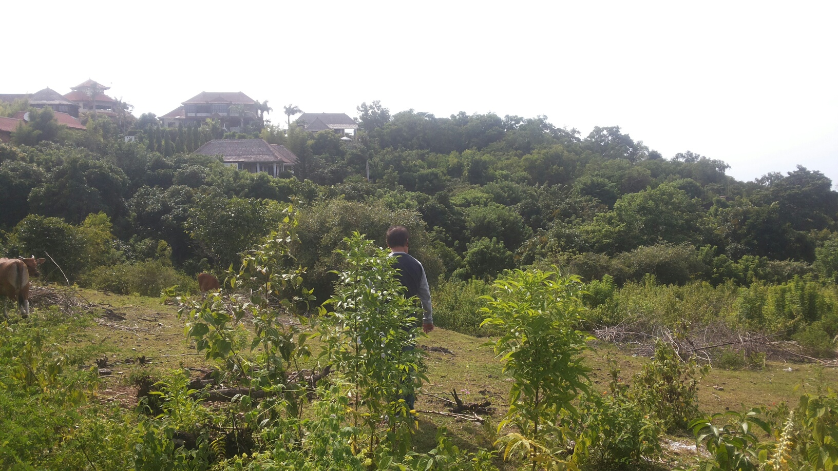 17.8 ARE FREEHOLD LAND IN UNGASAN-BUKIT GREAT VIEW