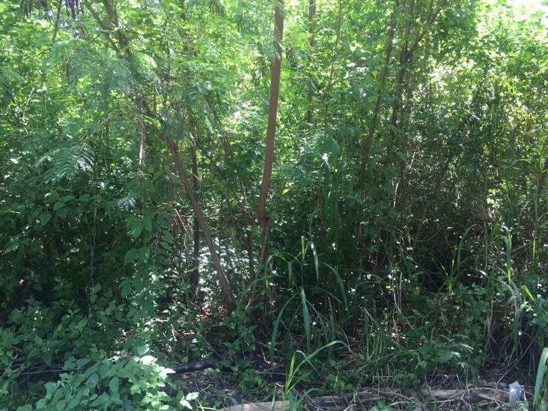Freehold Commercial Land For Sale In Canggu