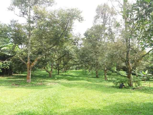 Tanah + Villa di Desa Tanjungsari Cari Bogor
