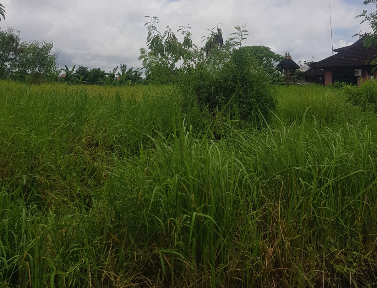 GREAT LAND FOR COMMERCIAL BUILDING IN BATU BOLONG