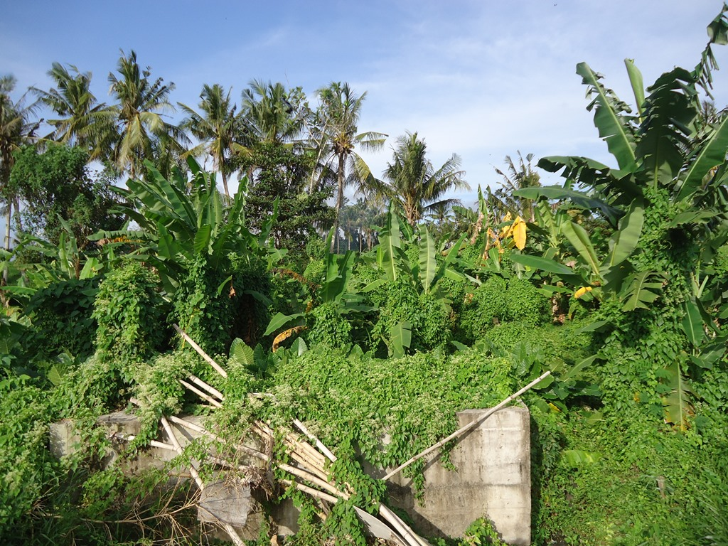 For Sale 1200 sqm Freehold Land in Pererenan With Green View