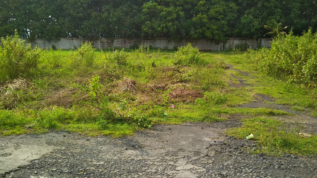 Land For Sale in Munggu Close to Seseh Beach