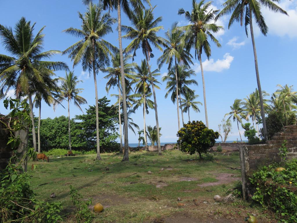 Freehold Beachfront Land (Two Units of 1420m2 & 1430m2)  Pengragoan Beach in Pekutatan, West Bali