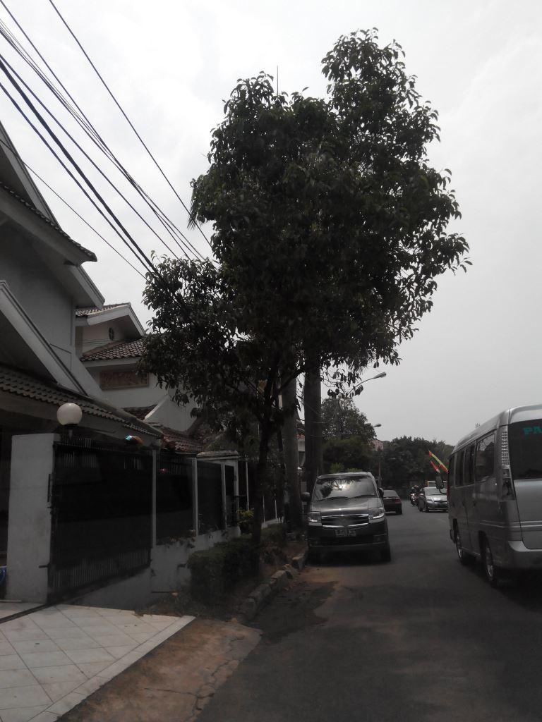 HOT RENT !!! Rumah Siap Huni dan Strategis @Kasuari Raya, Bintaro